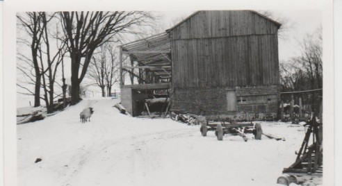 Addition to the barn looking east from the house (circa 1955)